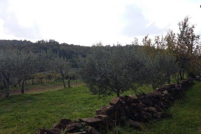 Land, 1106 m2, For Sale, Buje - Momjan